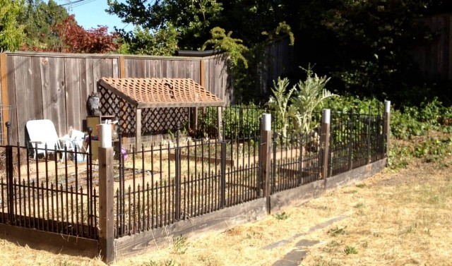 The backyard. Blank slate or health hazard?