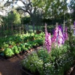 My vision of a bountiful vegetable garden