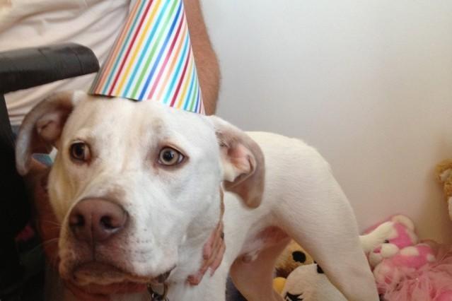 Happy Birthday to the Dog